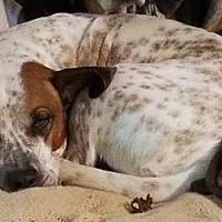 Adopt A Pet :: Dexter - Bakersville, NC
