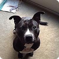 Adopt A Pet :: Myra - Chicago, IL