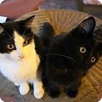 Adopt A Pet :: Mayhem & Odyssey - West Dundee, IL