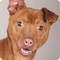 Adopt A Pet :: Lady - Chicago, IL