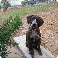 Adopt A Pet :: Bre - Fulton, MD