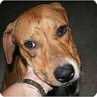 Adopt A Pet :: Nellie - Kingwood, TX