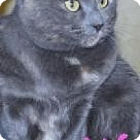 Adopt A Pet :: Smokey - Prescott, AZ