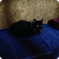 Adopt A Pet :: Lil Dude - Lancaster, MA