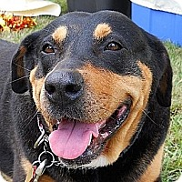 Adopt A Pet :: Lottie - Kingwood, TX