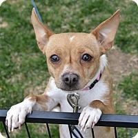 Adopt A Pet :: Minnie - Meridian, ID