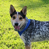 Adopt A Pet :: Gunner - Ft. Myers, FL