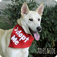 Adopt A Pet :: Adelaide - Houston, TX