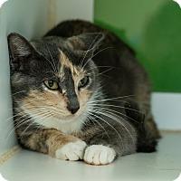 Adopt A Pet :: Aileen - Houston, TX