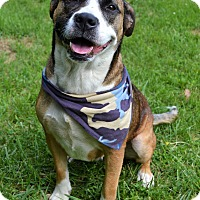 Adopt A Pet :: Stella - Michigan City, IN