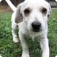 Adopt A Pet :: Tiny Tanner - Plainfield, CT