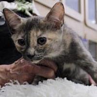 Adopt A Pet :: Fe Fe - Whitehall, PA