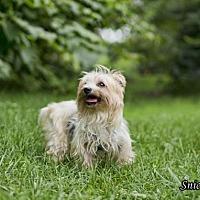 Adopt A Pet :: Snickie - Shamokin, PA