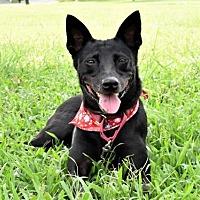 Adopt A Pet :: Sanny - San Francisco, CA