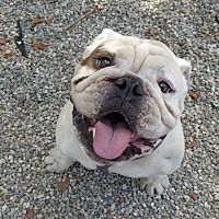 Adopt A Pet :: Pancho - Santa Ana, CA