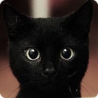 Adopt A Pet :: Peter Peter - Miami, FL