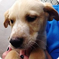 Adopt A Pet :: Sleepy - Silsbee, TX