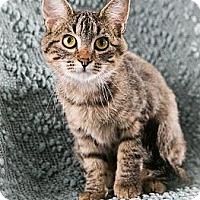 Adopt A Pet :: Templeton - Eagan, MN