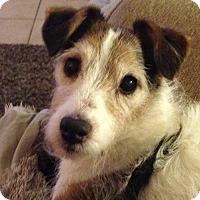 Adopt A Pet :: Pogo in Houston - Houston, TX