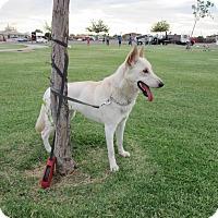 Adopt A Pet :: Tessa von Altenberg - Phoenix, AZ