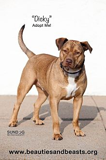 German Shepherd Dog Mix Dog for adoption in Wichita, Kansas - Dicky