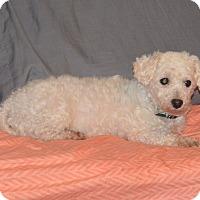 Adopt A Pet :: Diana - Prole, IA