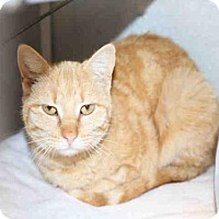 Adopt A Pet :: *GINGER* - Salt Lake City, UT