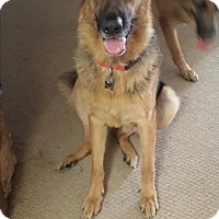 Adopt A Pet :: King & Duke (Courtesy Post) - Cerritos, CA