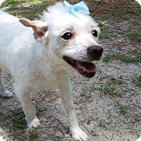 Adopt A Pet :: Suki - Weeki Wachee, FL