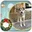 Photo 4 - Husky Mix Dog for adoption in Portland, Maine - Bear