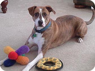 Boxer Mix Dog for adoption in Winston-Salem, North Carolina - Jay Jay