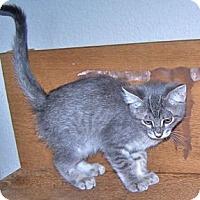 Adopt A Pet :: K-Lillian4-July - Colorado Springs, CO