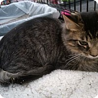 Adopt A Pet :: Patricia - Sterling Hgts, MI