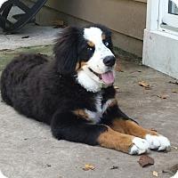 Adopt A Pet :: Piper - Westtown, PA