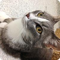Adopt A Pet :: Tofu - Newport Beach, CA