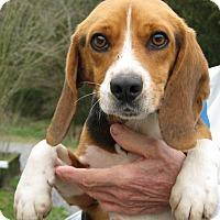 Adopt A Pet :: Pete - Richmond, VA