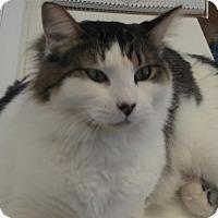 Adopt A Pet :: Paco - El Cajon, CA