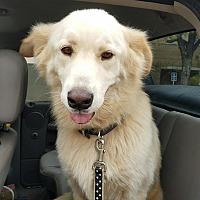 Adopt A Pet :: Legend - Kyle, TX