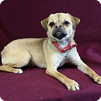 Adopt A Pet :: Jolene Montgomery - Urbana, OH