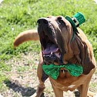 Adopt A Pet :: Dexter - Fayetteville, AR