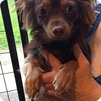 Adopt A Pet :: Joey - Kansas city, MO
