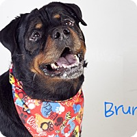 Adopt A Pet :: Bruno - Tracy, CA