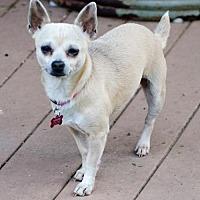Adopt A Pet :: MISSY - Washington, DC