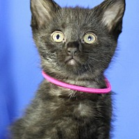 Adopt A Pet :: Carla Ponti - Winston-Salem, NC