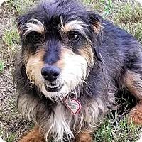 Adopt A Pet :: Brandon in TN - Columbia, TN