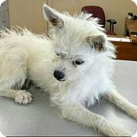 Adopt A Pet :: Alice-ADOPTION PENDING - Boulder, CO