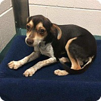 Adopt A Pet :: REESE CUP - Hampton, VA