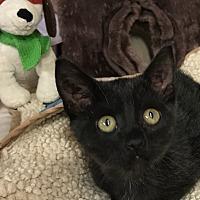 Adopt A Pet :: Sebastian - Yukon, OK