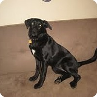 Adopt A Pet :: Colby - Lewisville, IN