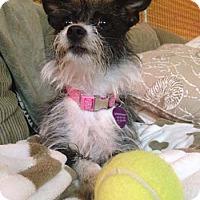 Adopt A Pet :: SCARLETT - Salt Lake City, UT